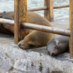 Protect the Galapagos Islands
