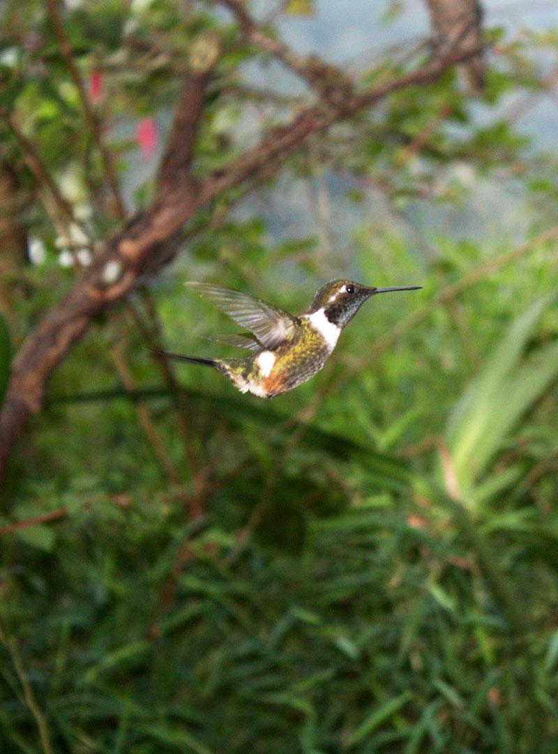 Ecuador Mindo Birdwaching