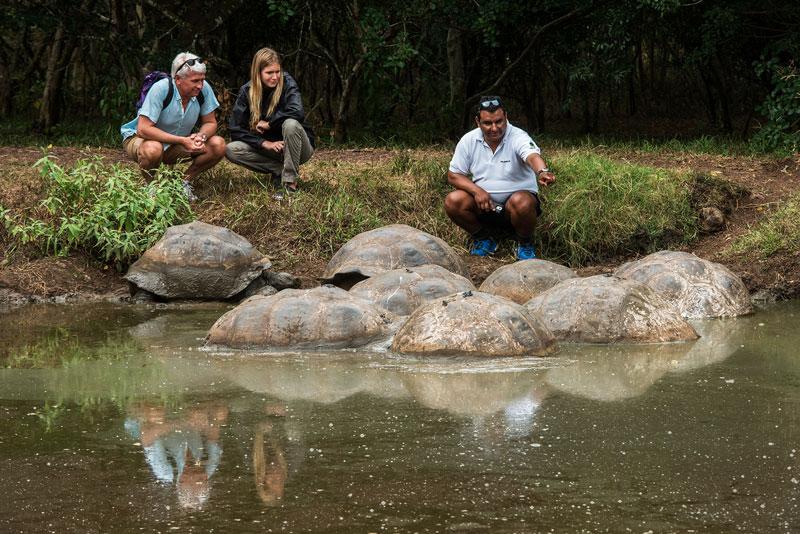 Tortoise Reserve