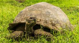 galapagos-turtle-customer-reviews