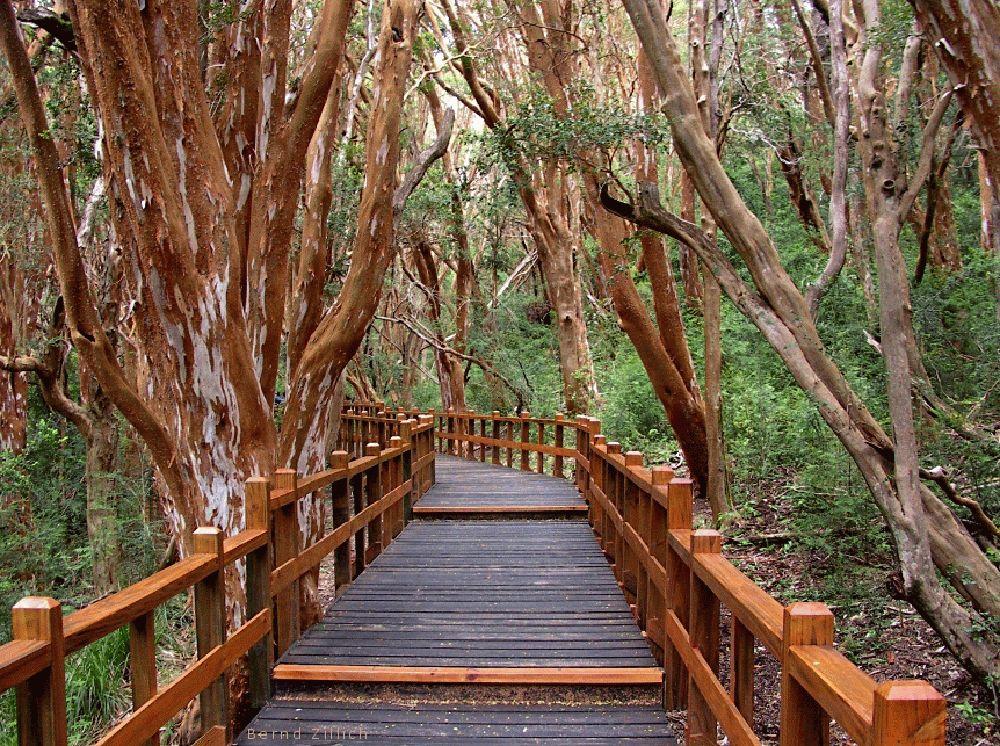 Arrayanes Forest Argentina