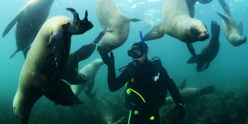 Diving in Puerto Madryn
