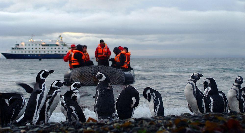 Megallanes Penguins Argentina