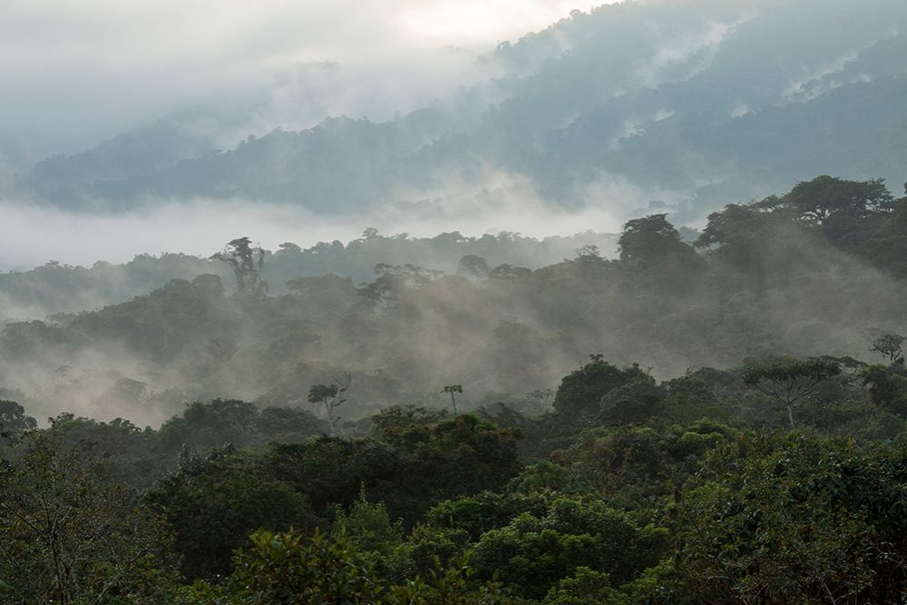 Napo Amazon Ecuador