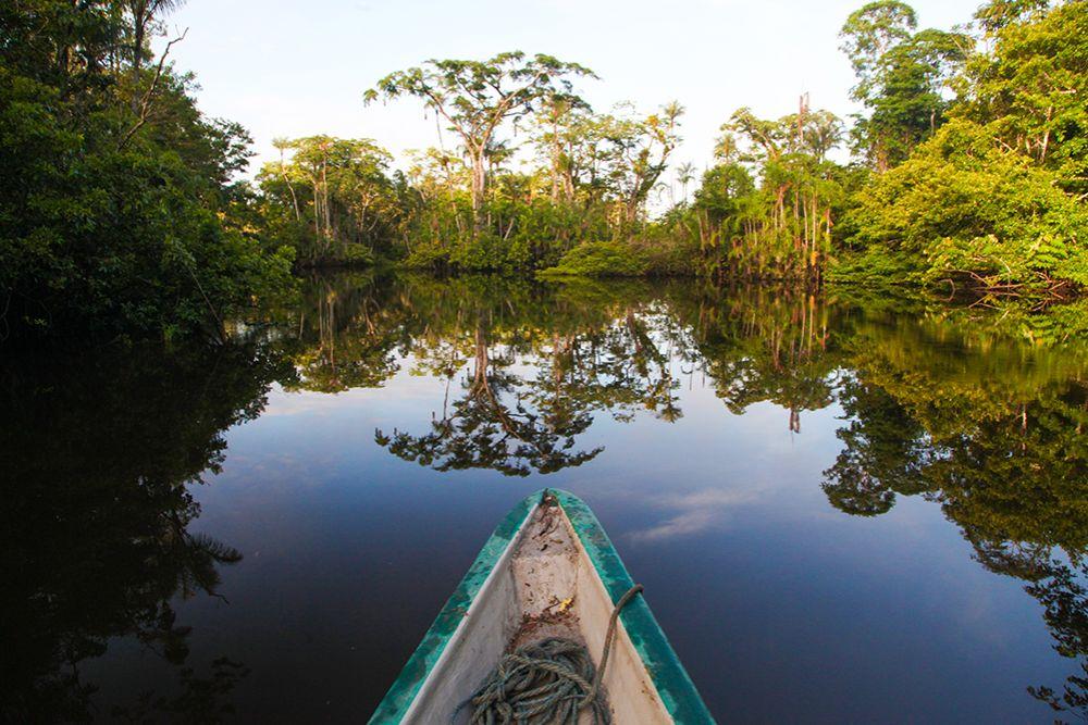 Orellana Jungle