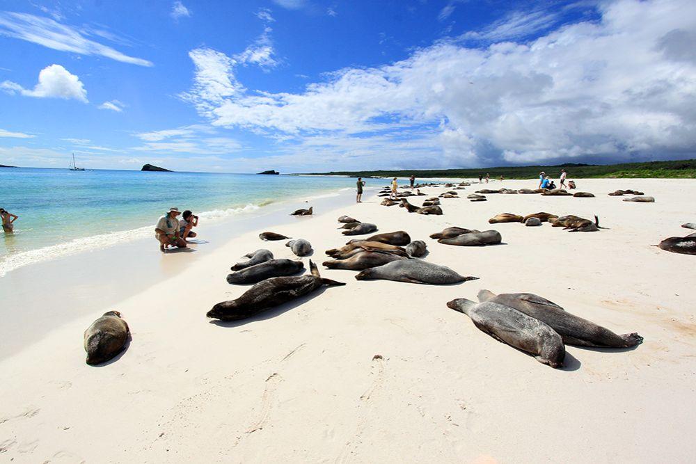 Sealions Galapagos